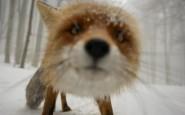 670x447xamazing-fox-photos-20-2.jpg.pagespeed.ic.NfWYQxY_ig