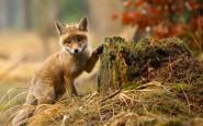 670x478xamazing-fox-photos-25.jpg.pagespeed.ic.nZmXtmvBhM