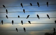 birds-on-the-wires-musical-composition-jarbas-agnelli-3__880