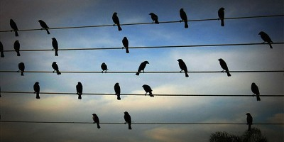 birds on the wires musical composition jarbas agnelli 3  880