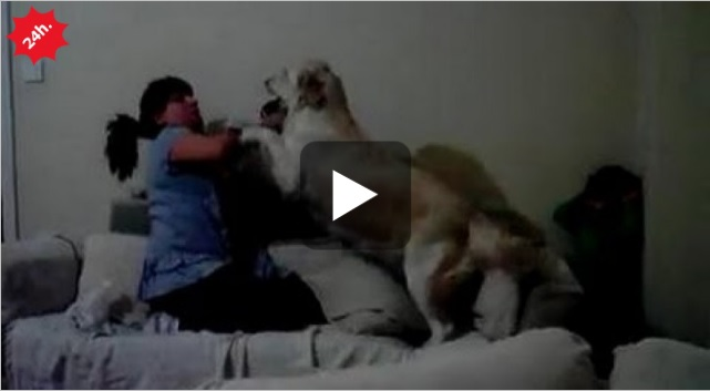 cane protegge bimbo