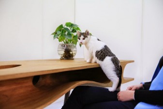 catable-shared-table-for-catsand-people-2