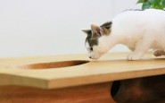 catable-shared-table-for-catsand-people-3