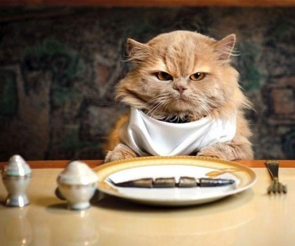 cibo-gatti