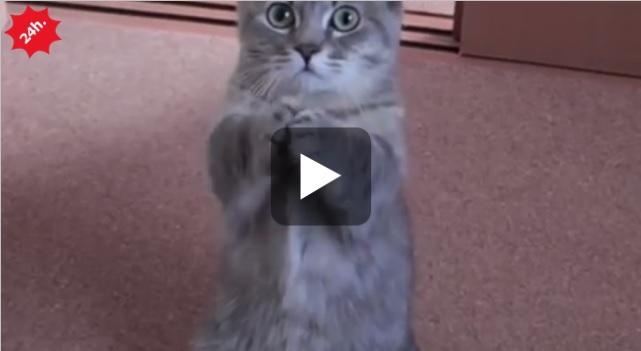 gattino prega per cibo
