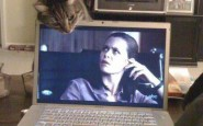 right-angle-cat-laptop