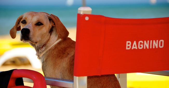 vacanze-cani