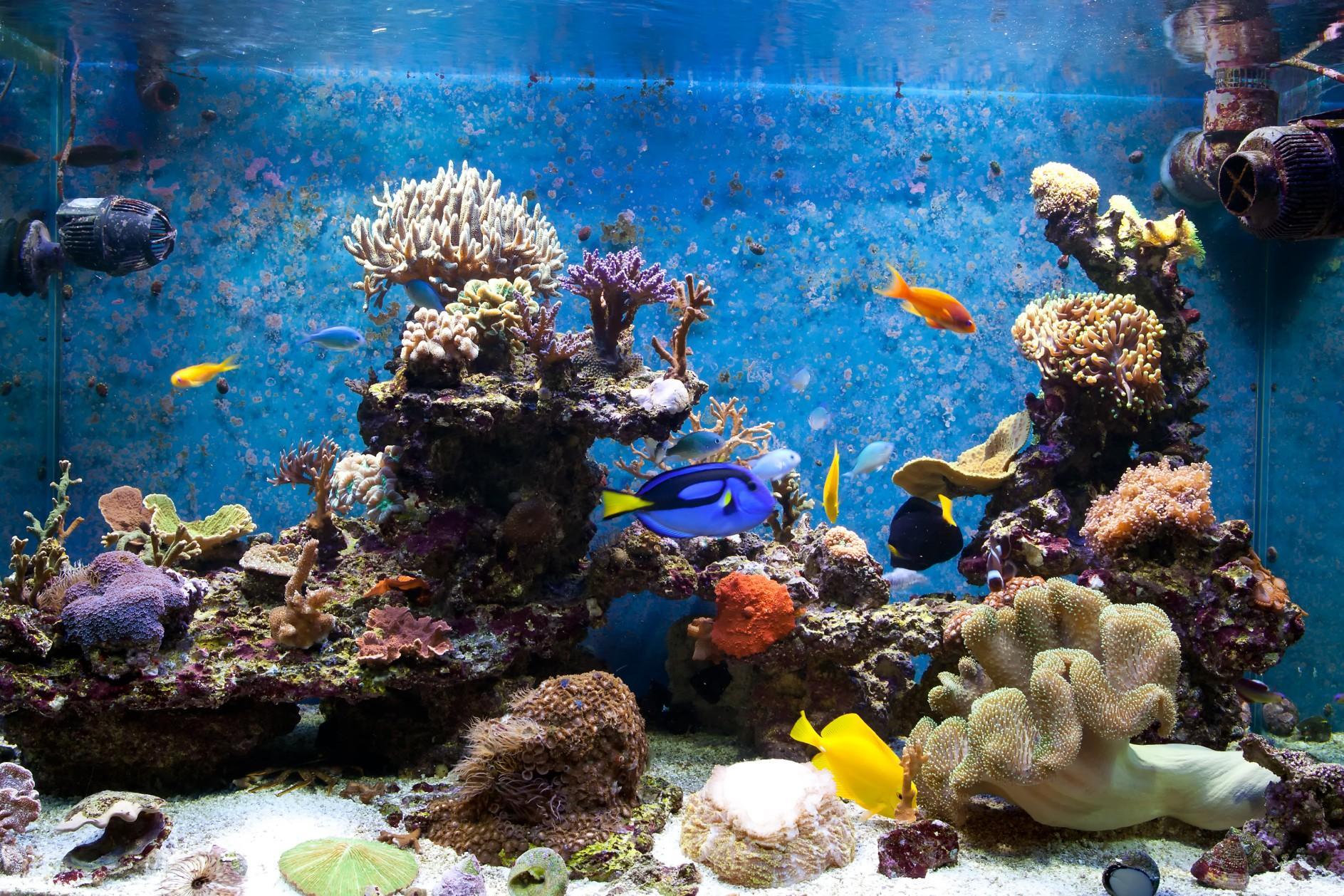 Come si pu allestire un acquario - Acquario in casa ...