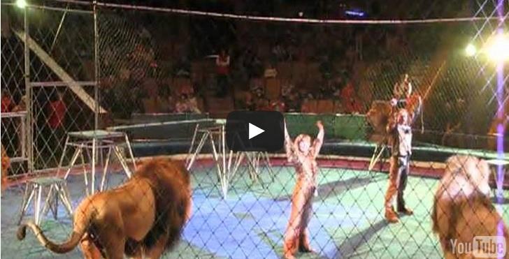 leone ribella