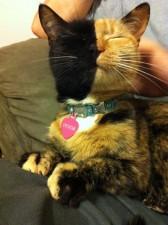 two faced chimera cat venus 17