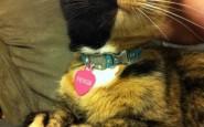 two-faced-chimera-cat-venus-17