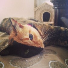 two-faced-chimera-cat-venus-20