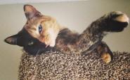 two-faced-chimera-cat-venus-22