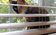 two-faced-chimera-cat-venus-23