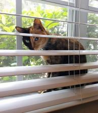 two faced chimera cat venus 23