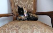 two-faced-chimera-cat-venus-25