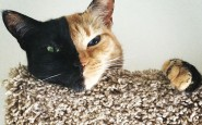 two-faced-chimera-cat-venus-3