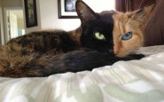 two-faced-chimera-cat-venus-32