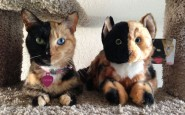 two-faced-chimera-cat-venus-6