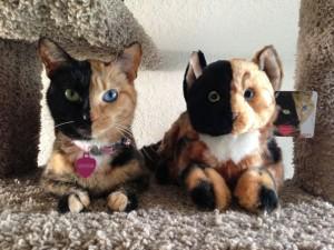 two faced chimera cat venus 6