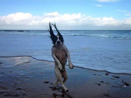 10 scatti buffissimi di cagnolini beccati quando meno se lo aspettano