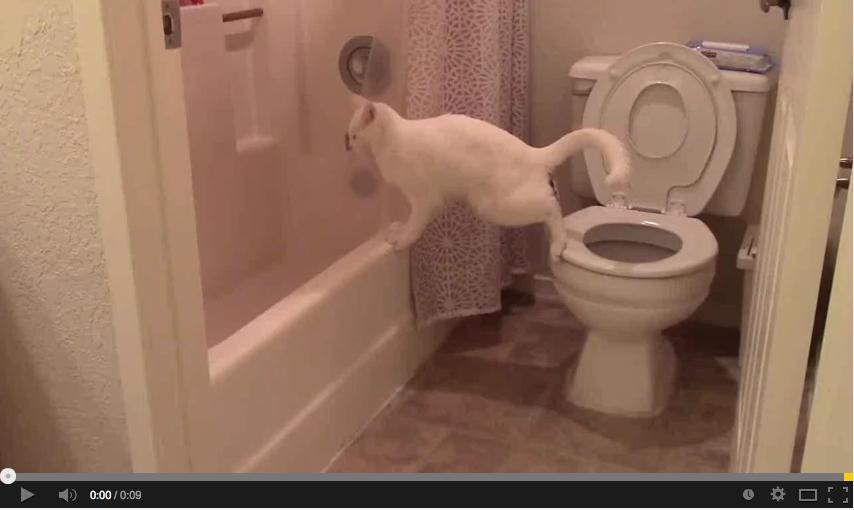 Il gatto che tenta di stare sul water come noi umani