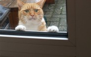 cat-reaction1