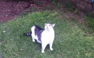 cat-reaction4
