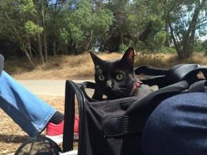 cat-reaction8