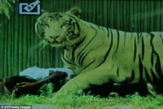 tigre-bianca1