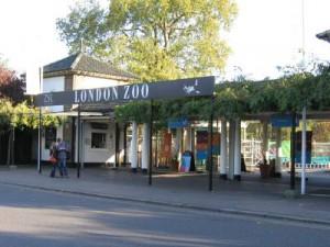 Zoo di Londra, check up completo per tutti gli animali