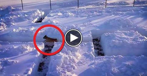 Cane e padrone giocano a nascondino tra la neve: video