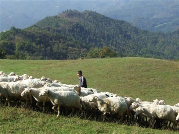 Connessione wifi anche in campagna sfruttando le pecore