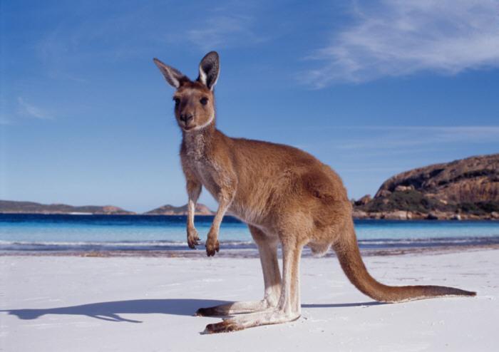 Le migliori cose da fare a Perth 2015 australia