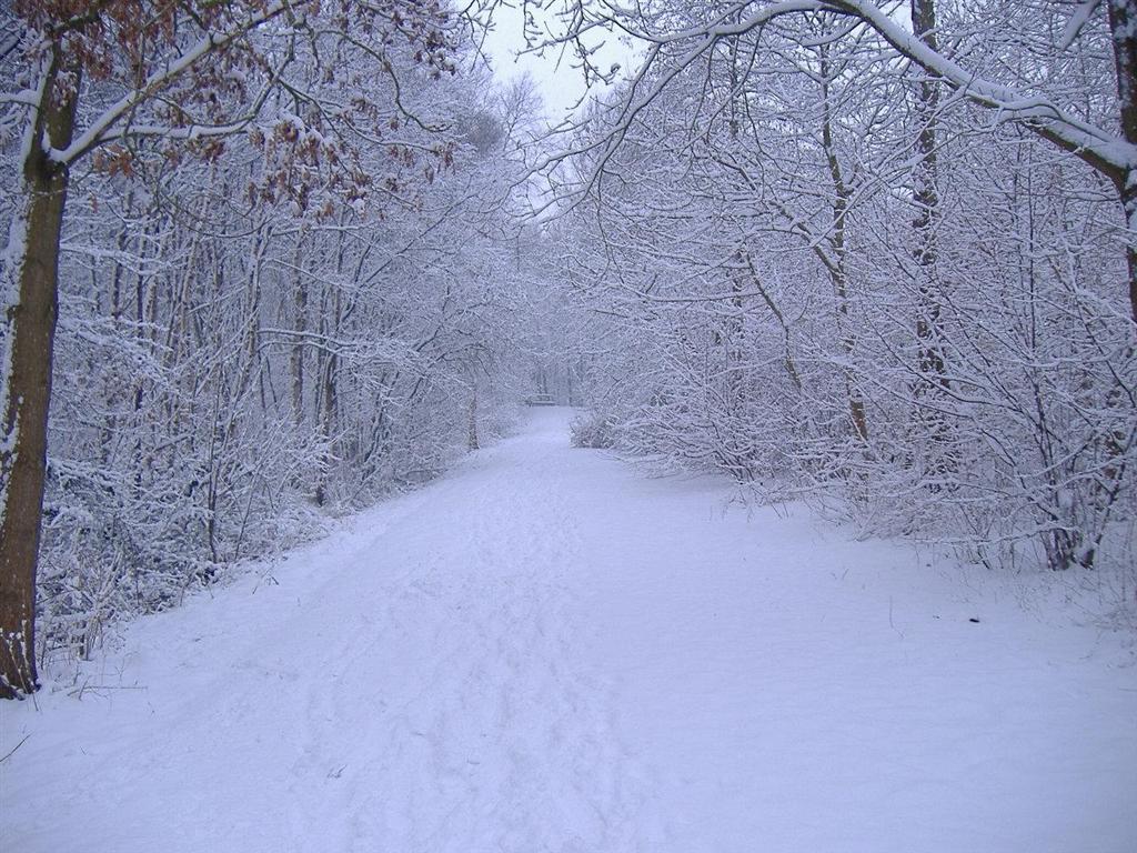 Come fare foto perfette con la neve