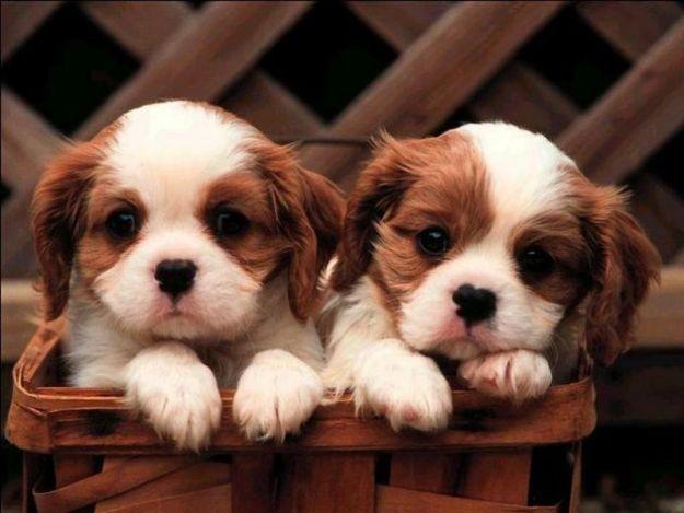 Idee regalo per cane da appartamento
