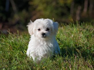 costo di un cane