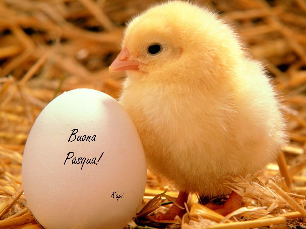 Frasi cordiali auguri di Pasqua