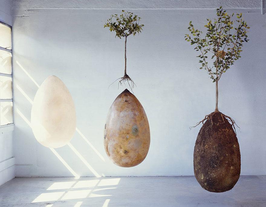 Come funziona sepoltura in gusci organici