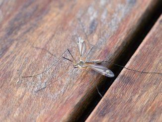 Prevenire le punture di zanzara