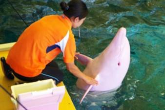 PAY-Albino-Dolphin (2)