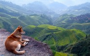 insegnamenti-cani-panorama