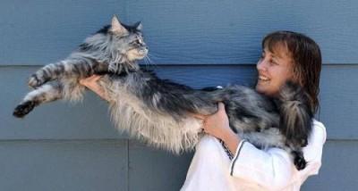 longest cat