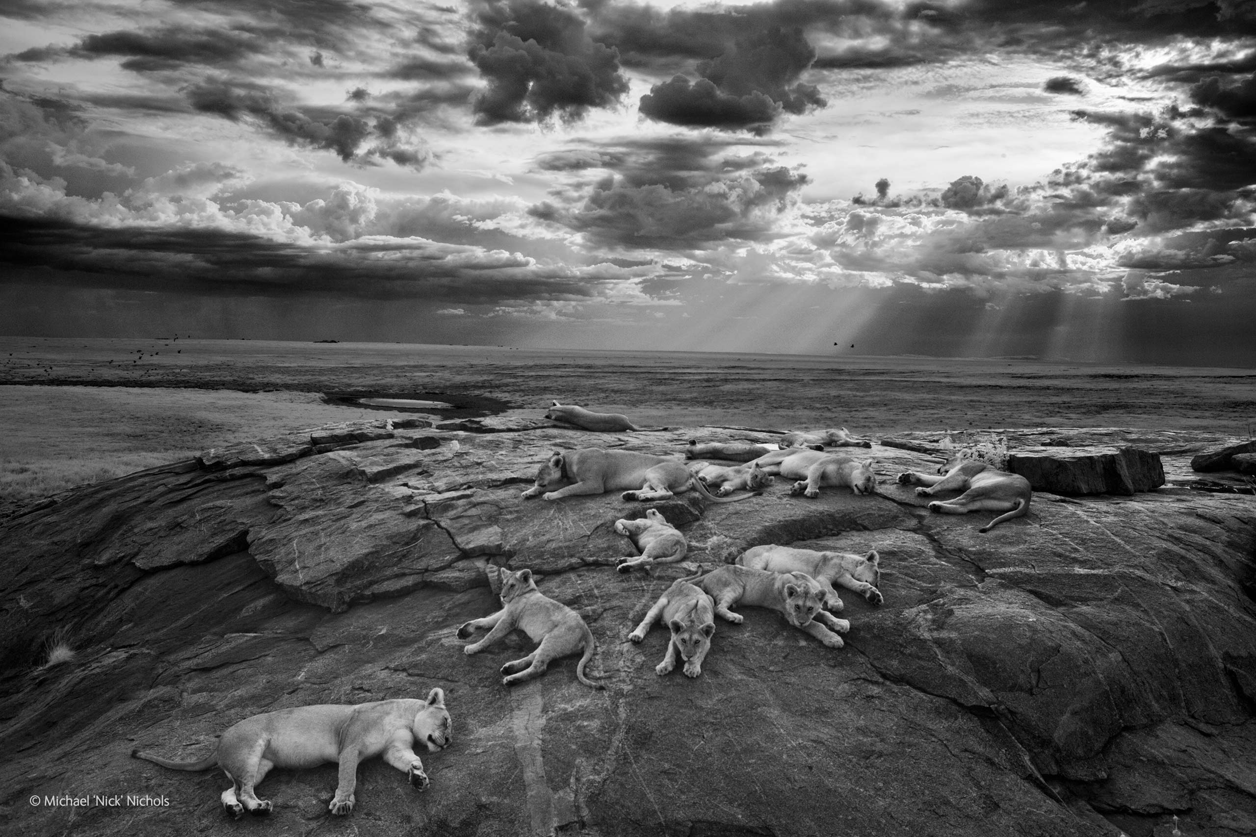 Wildlife Photographer of the Year a Milano