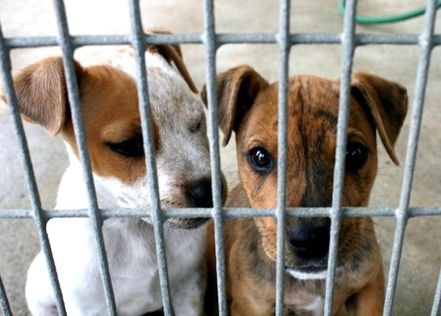 Santeramo, cani ammassati e lasciati a morire