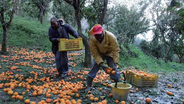 Flai Cgil evidenzia irregolarità lavoro agricolo in Puglia