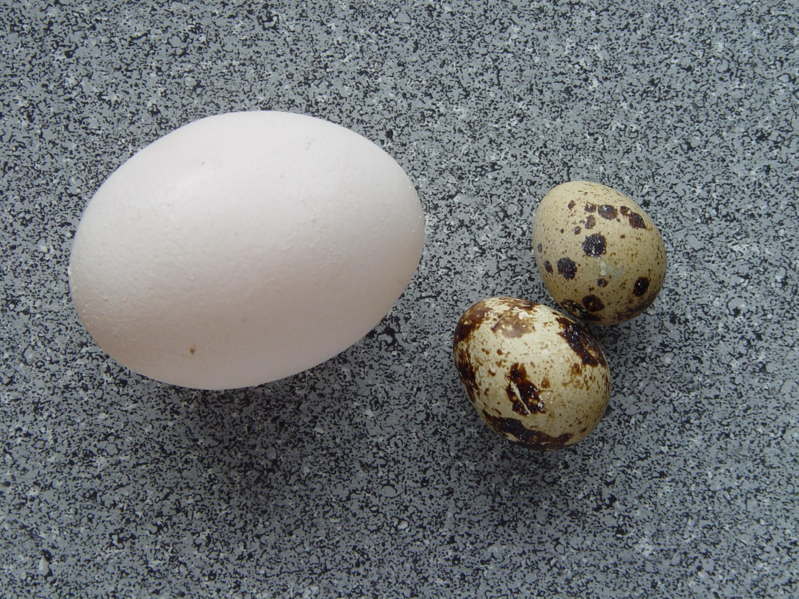 La sua gallina depone un uovo enorme, ecco che cosa contiene