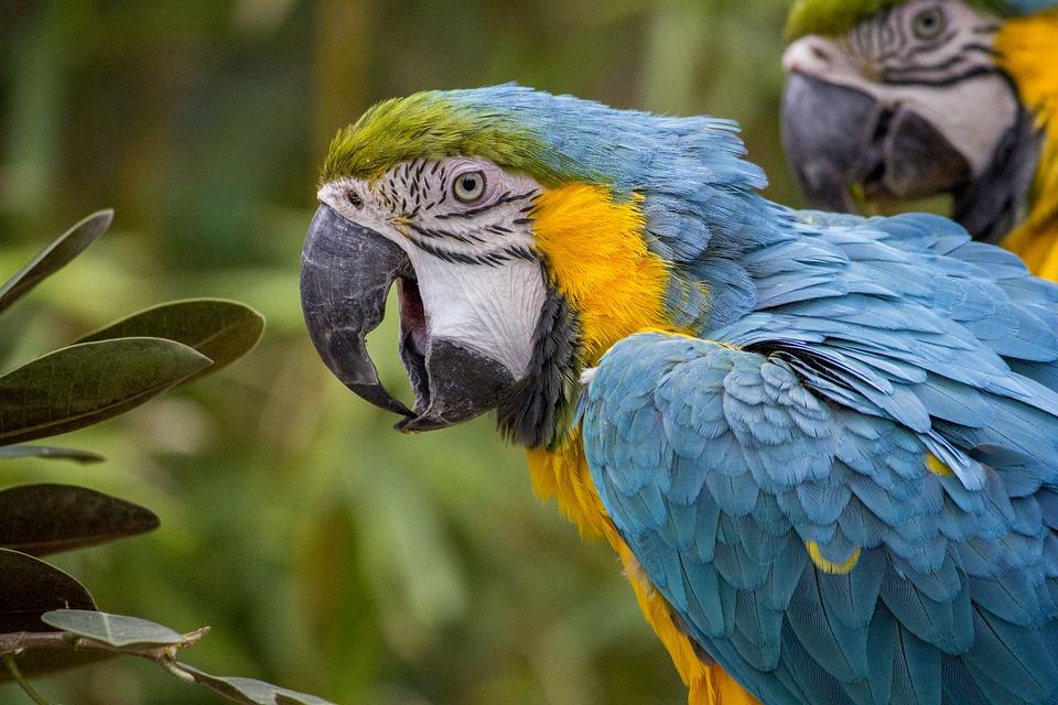 Un pappagallo insulta il padrone che ha rotto la sua gabbia