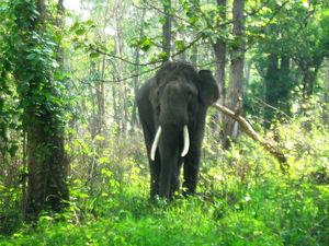 Elefanti in pericolo estinzione a causa della caccia indiscriminata