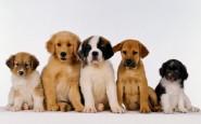 Come sapere se si è pronti a prendere un cane?
